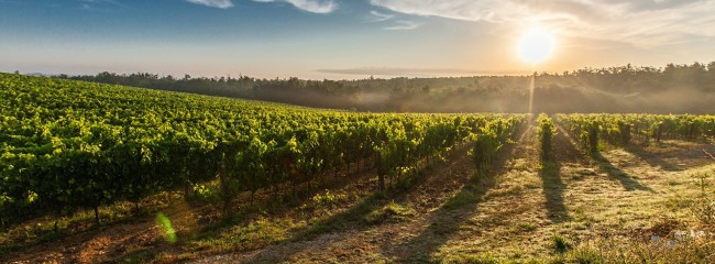 Image vins